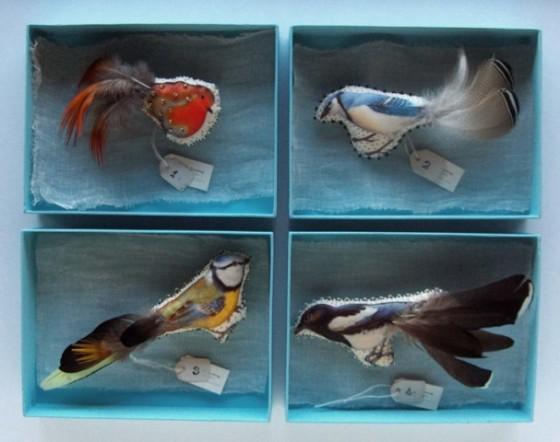 oiseaux à plumes novembre [640x480]
