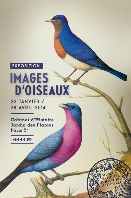 images d'oiseaux
